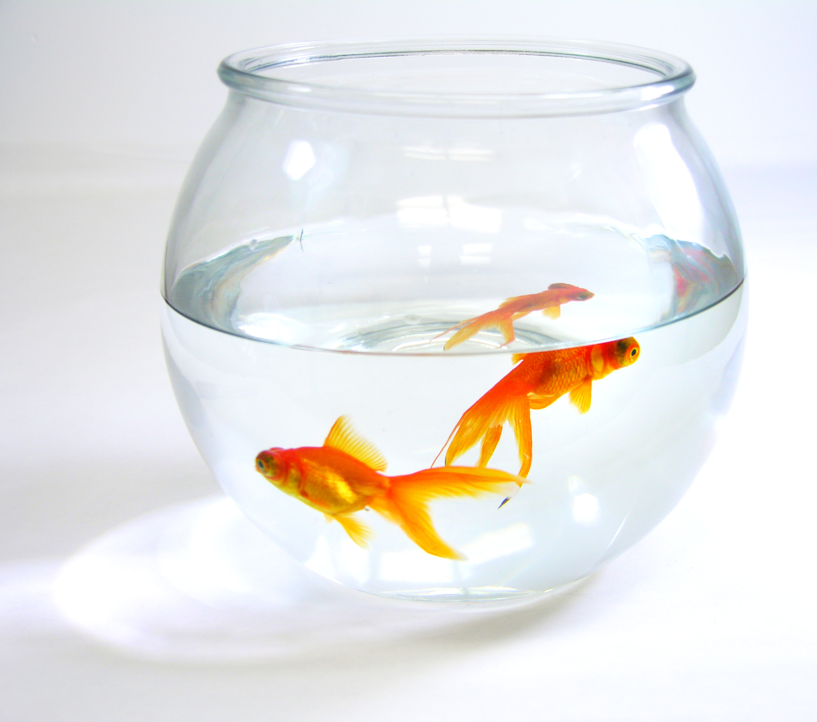 Goldfish Zombies And How To Get Out Of A Rut Choose