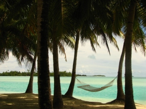A hammock between palm trees