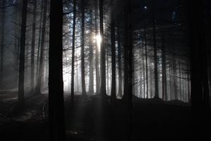 a dark forest