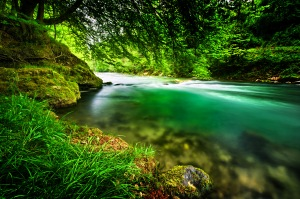 a river of green water