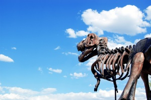 t-rex dinosaur fossil