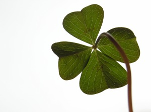 four 4 leaf clover